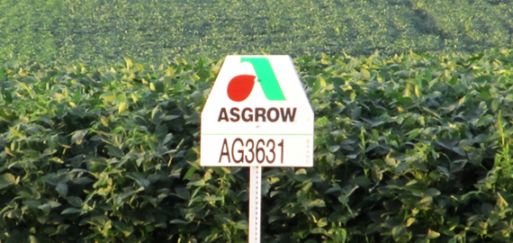 Asgrow sign w Soybeans